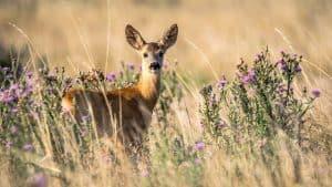 dear-hunting-things